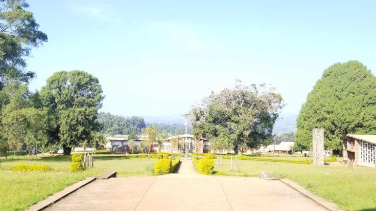 librarycomplex-view-1